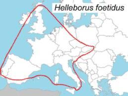 Distribuzione dell'Helleborus foetidus