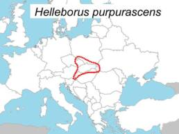 Distribuzione dell'Helleborus purpurascens