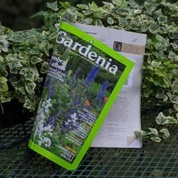 Epimedium su Gardenia agosto 2021